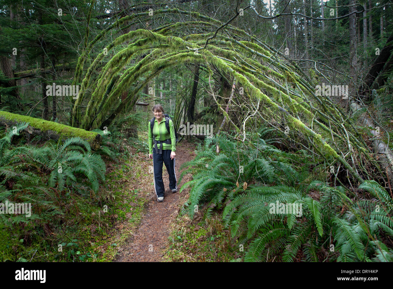 WASHINGTON - Hiker on One View Trail, part of Tiger Mountain Trail System in the Issaquah Alps, Cascade Mountains foothills. - Stock Image