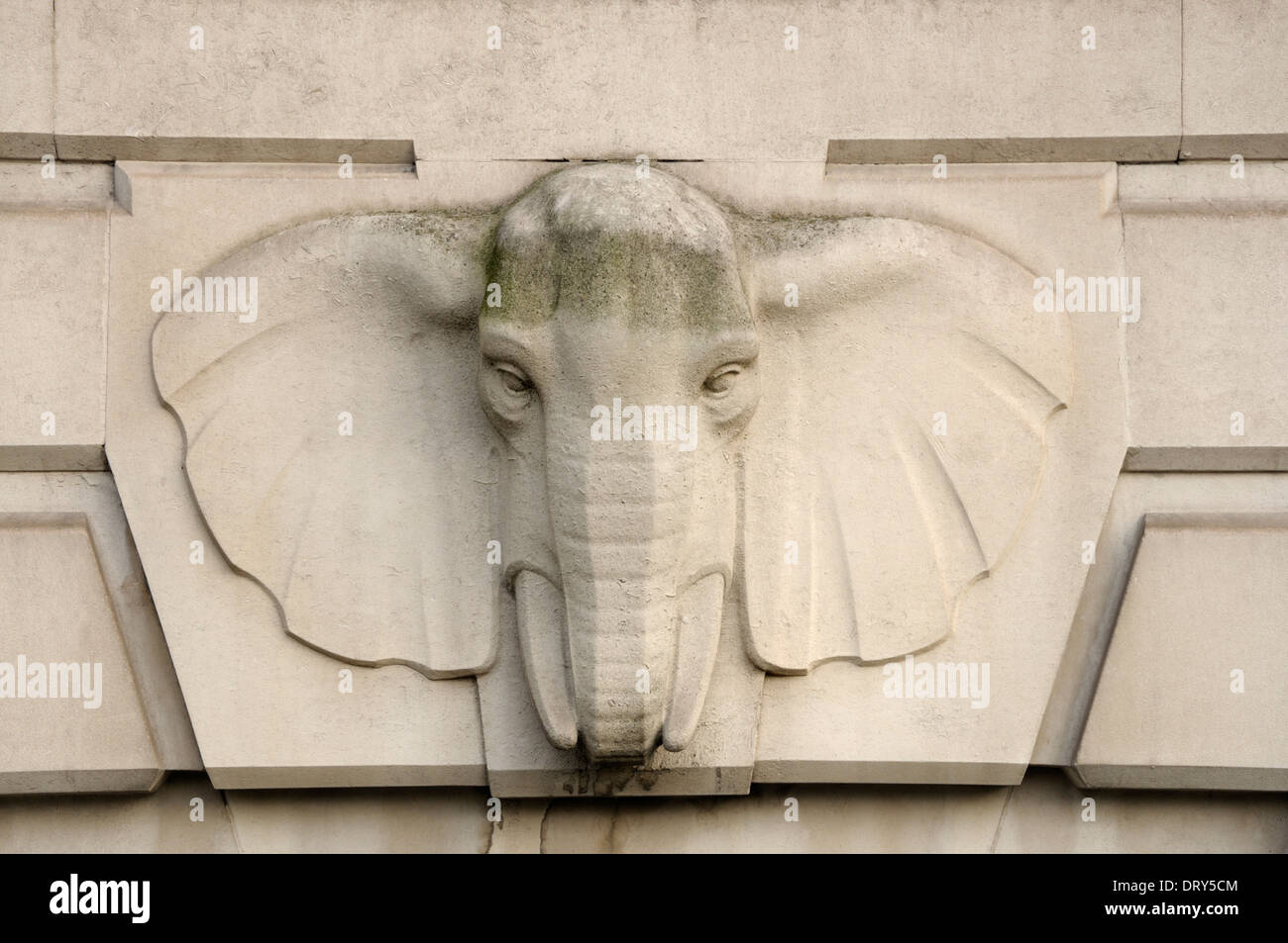 London, England, UK. Detail on the facade of South Africa House (South African High Commission), Trafalgar Square. Elephant head - Stock Image