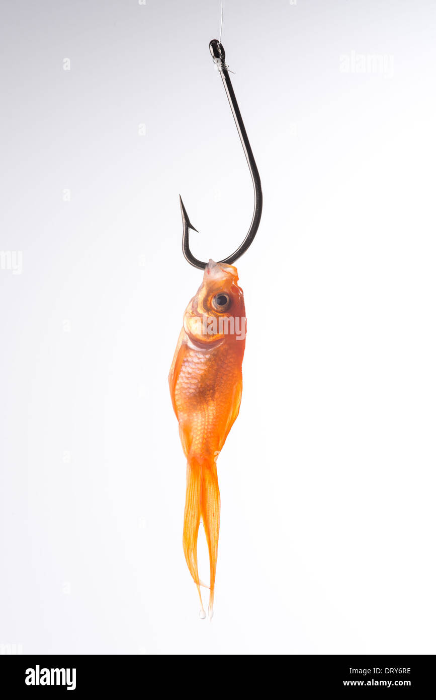 Goldfish on a hook - Stock Image