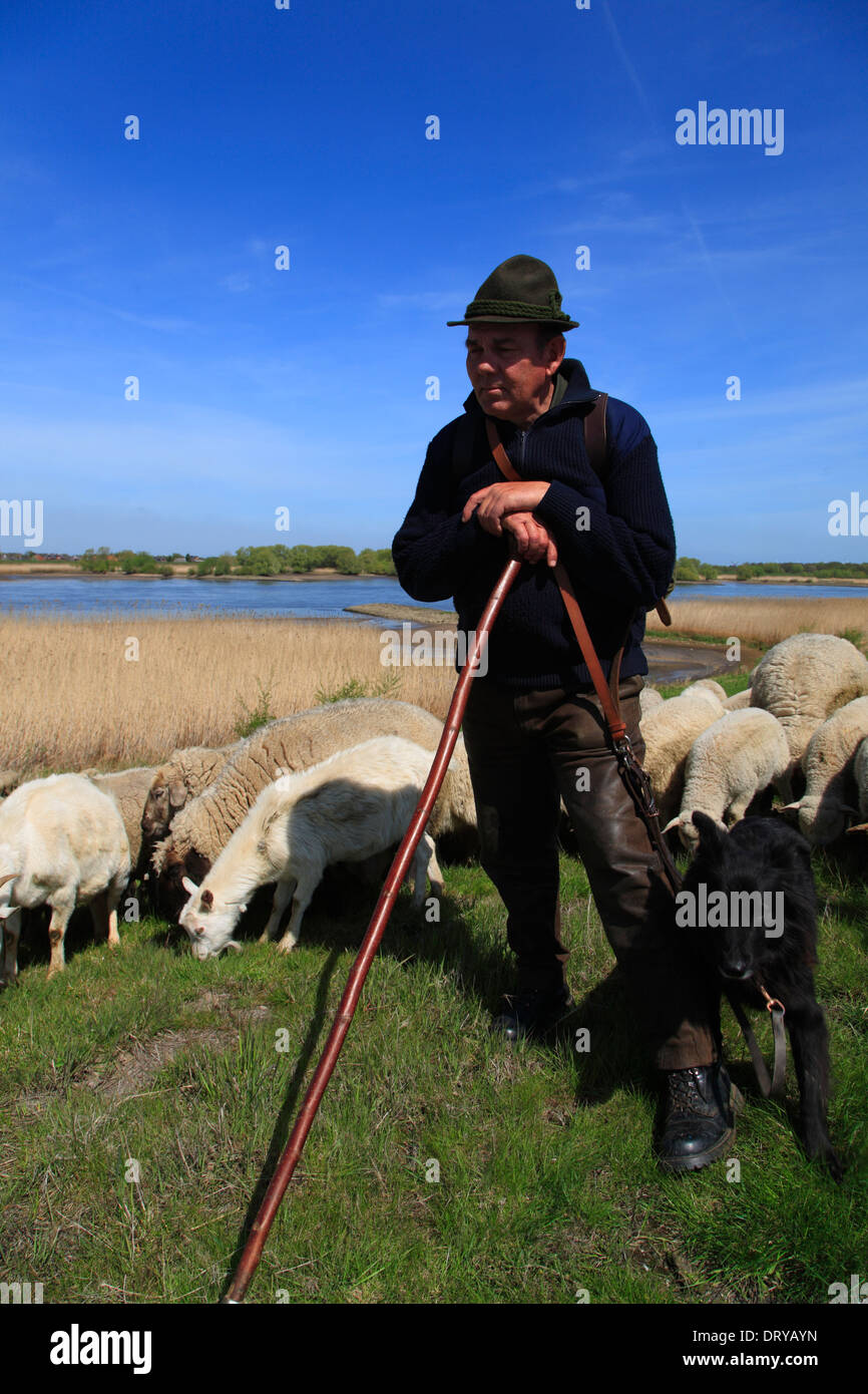 Elbe River Cycle Route Flock Of Sheeps With Shepherd On The Dike Near Hoopte