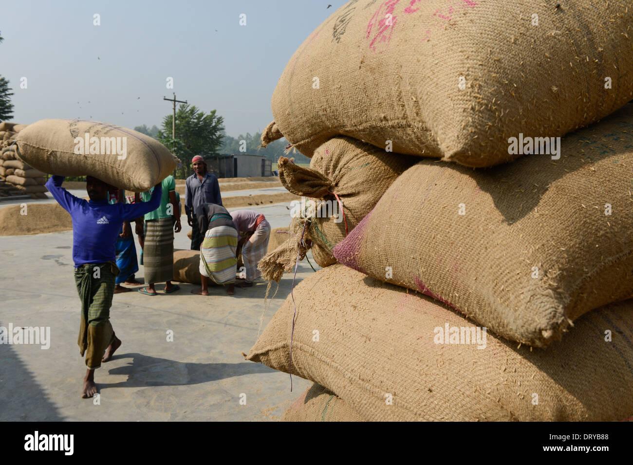 BANGLADESH Tangail, small rice mill near Kalihati, worker turn over paddy for drying in the sun - Stock Image