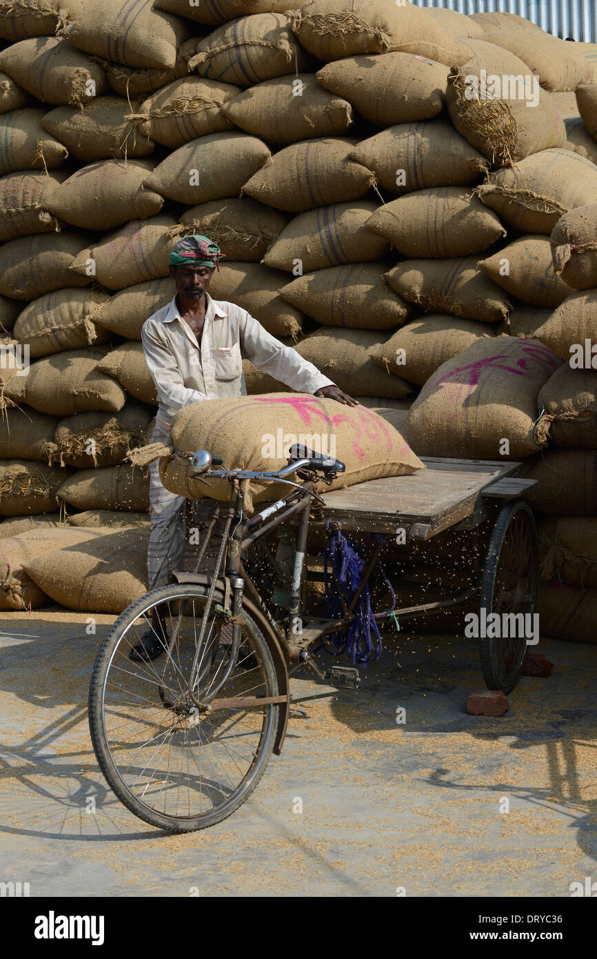 BANGLADESH Tangail, worker transport paddy in jute bags with bicycle rickshaw from rice mill near Kalihati - Stock Image