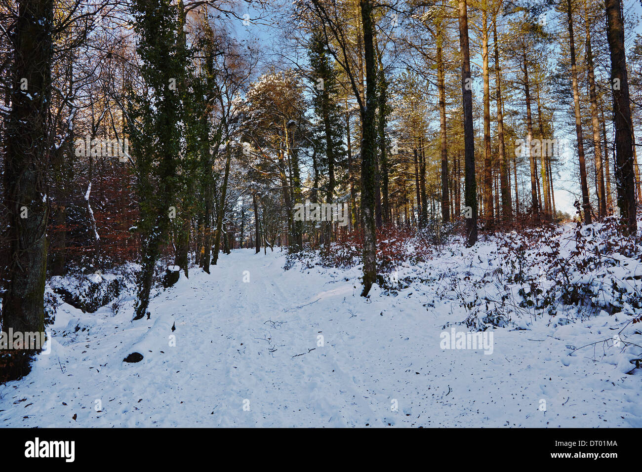 A road through the Haldon Hills in snow, near Mamhead, near Exeter, Devon, Great Britain. - Stock Image