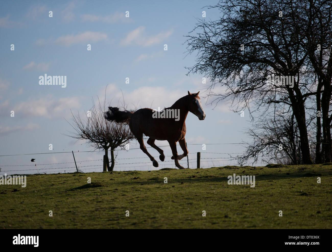 Wild Chestnut Horse Stock Photos & Wild Chestnut Horse ... - photo#47