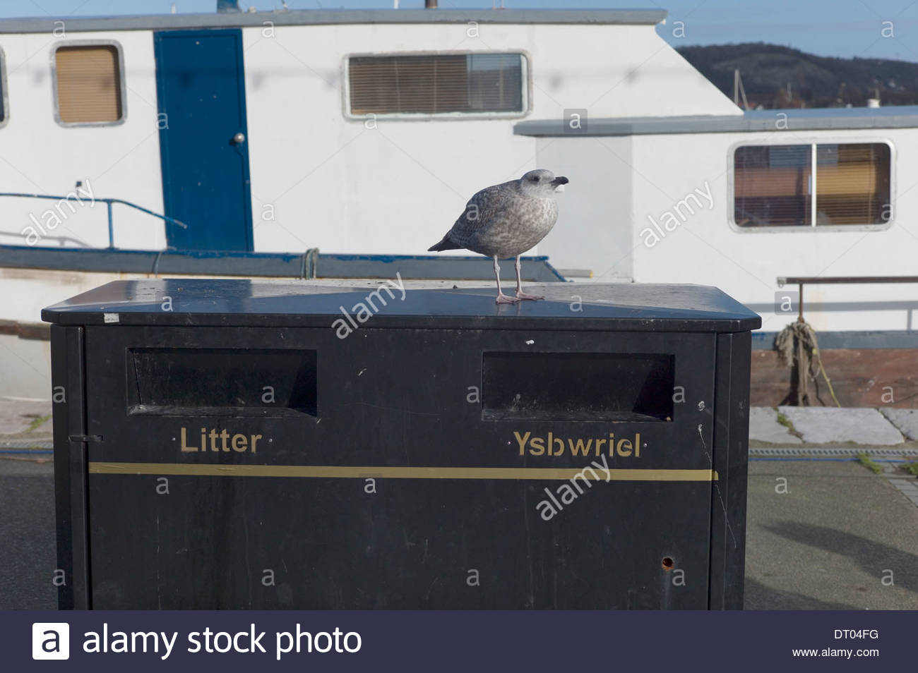 Seagull perched on a litter bin, Conwy Harbour, North Wales. UK - Stock Image