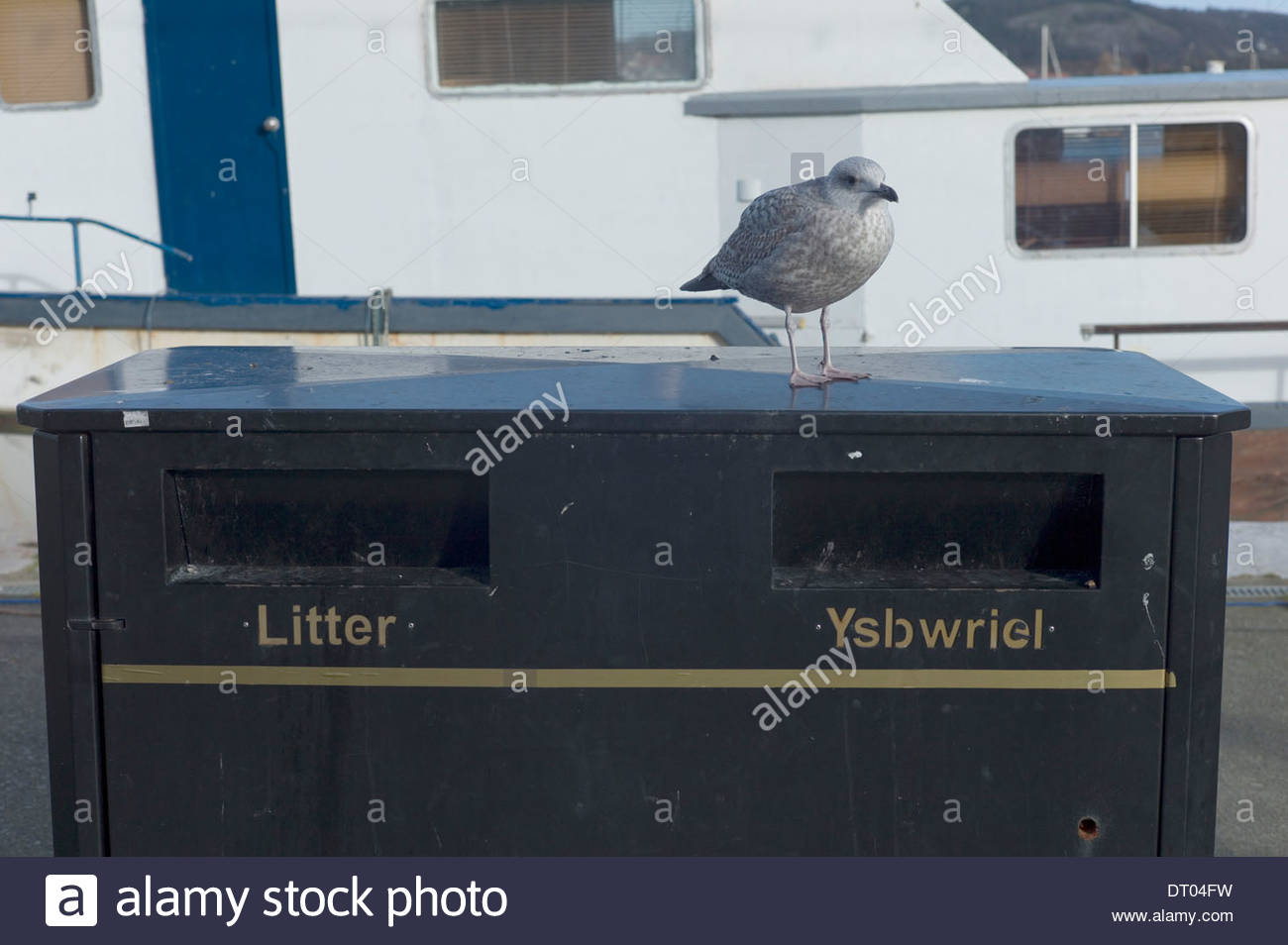 Seagull perched on a litter bin, Conwy Harbour, North Wales. UK Stock Photo
