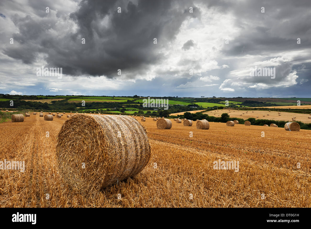 A field of hay bales located in the Cornish countryside under a stormy sky - Stock Image