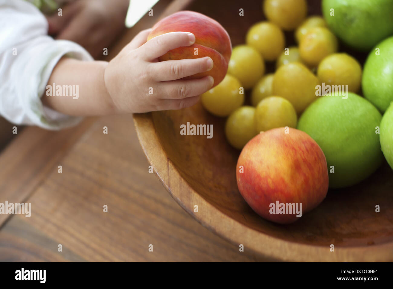 New York state USA small child one year old girl grasping fruit - Stock Image