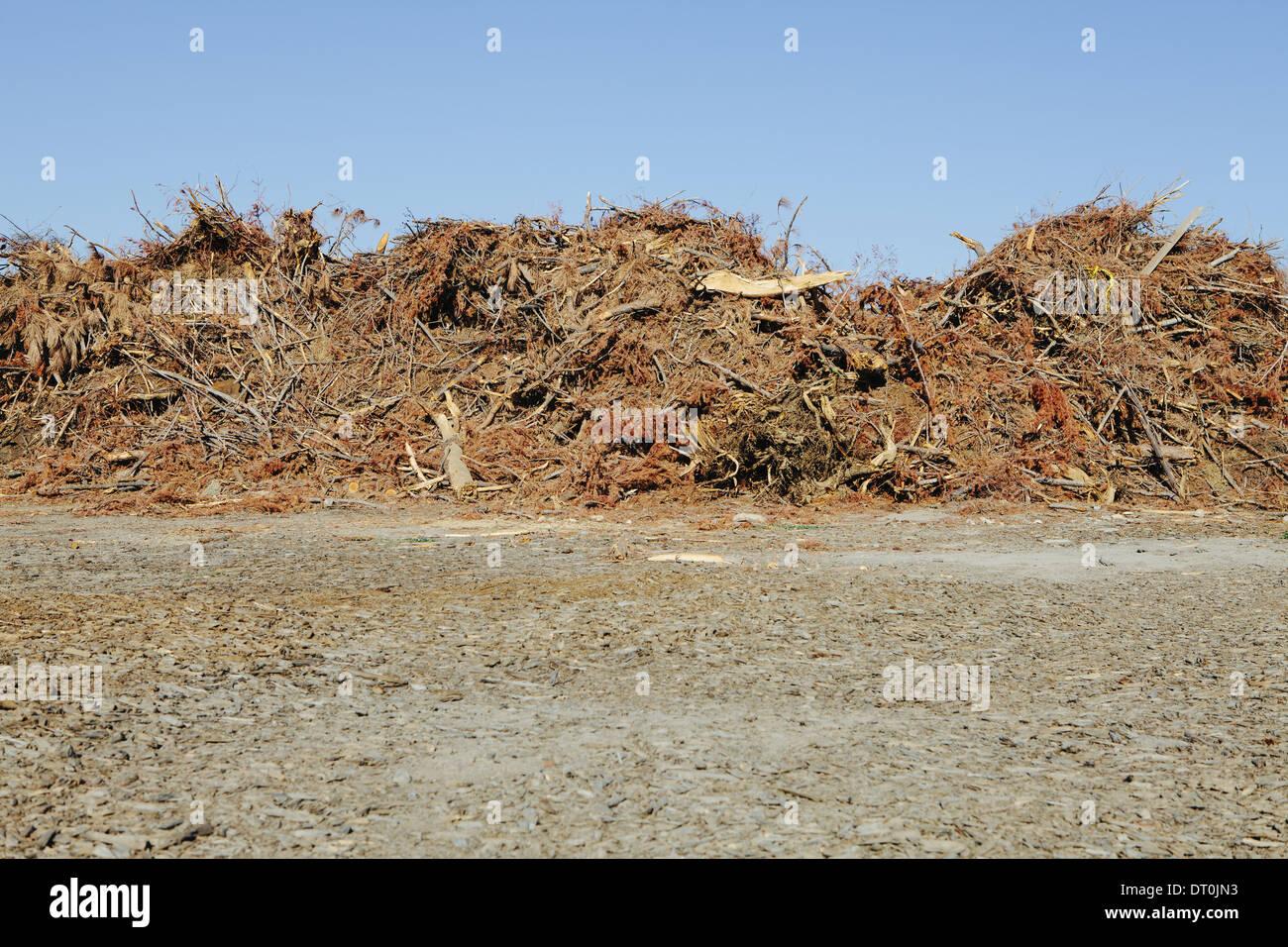 Washington state USA Pile of wood and tree debris - Stock Image