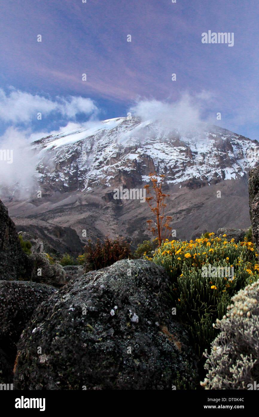 Mount Kilimanjaro at sunset at Karanga camp with wild flowers - Stock Image