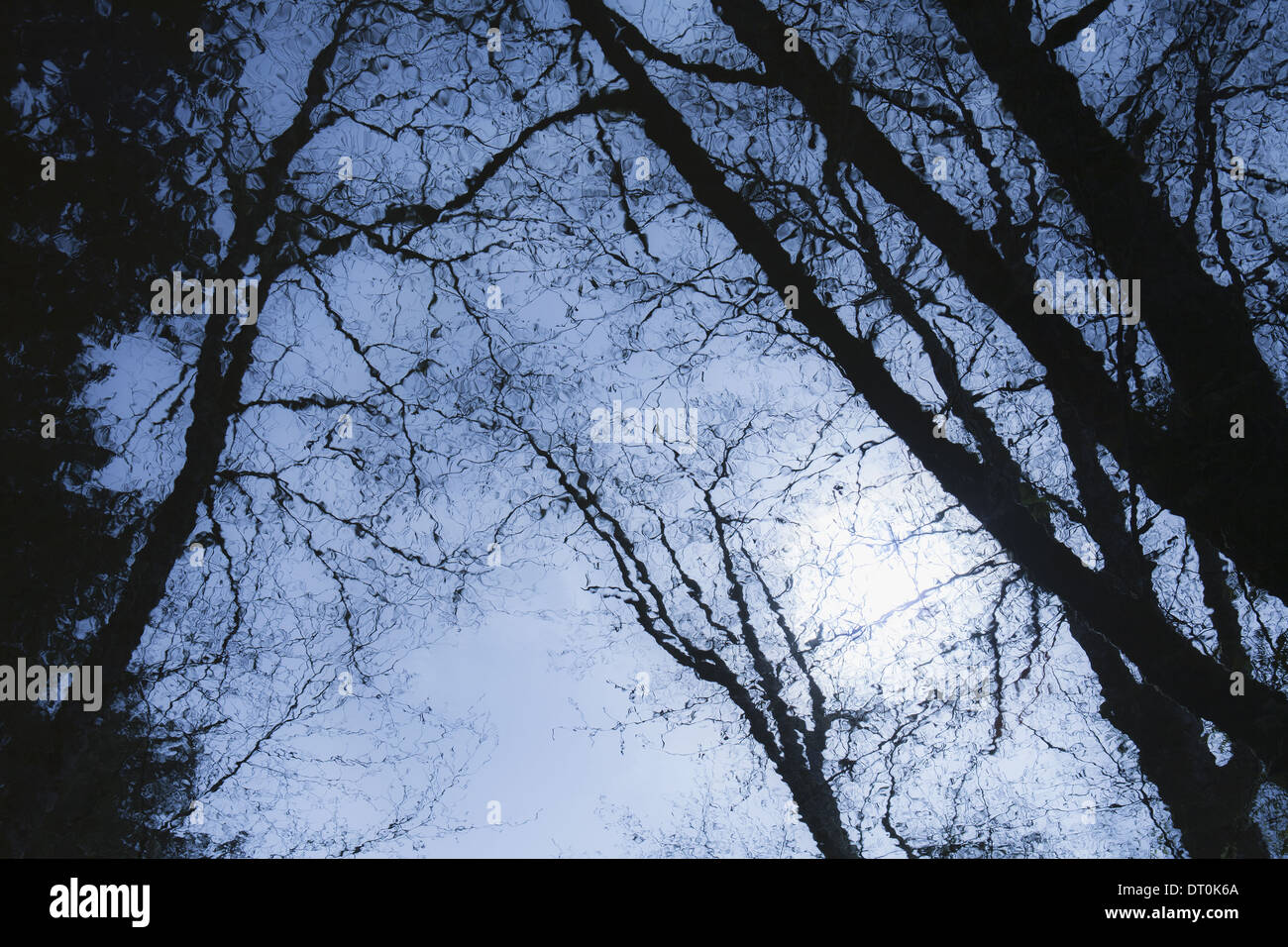 Trees reflected in calm water surface at dusk USA Stock Photo