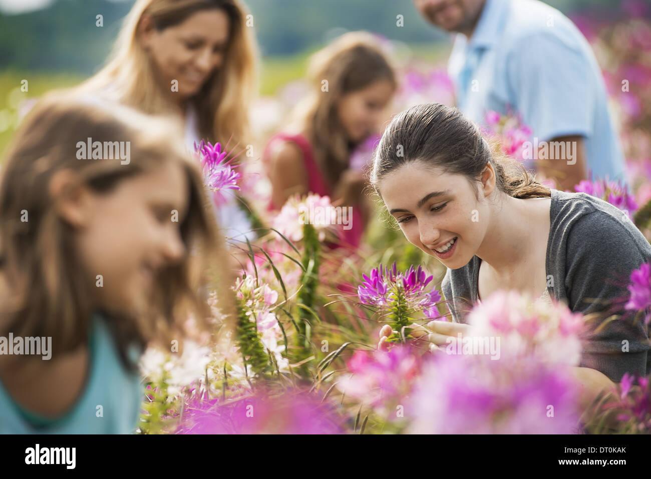 Woodstock New York USA Five people among the flowers organic Flower Farm - Stock Image