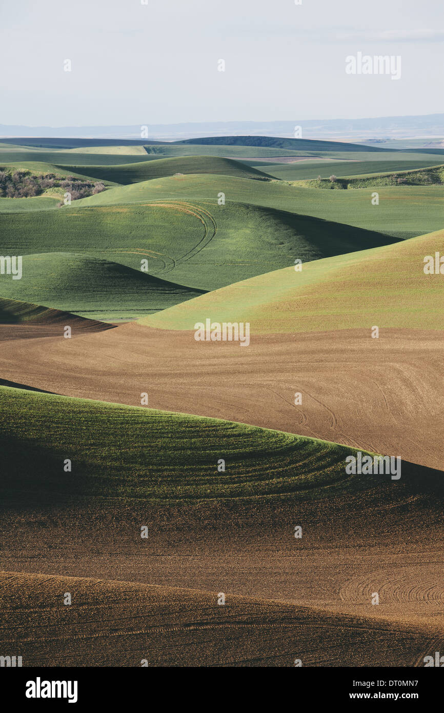 Washington USA view over green rolling hills and farmed fields - Stock Image