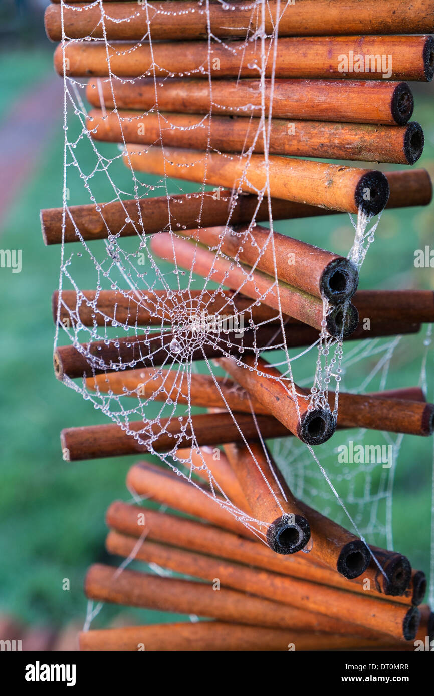 Frosty Spiders web on garden mobile - Stock Image