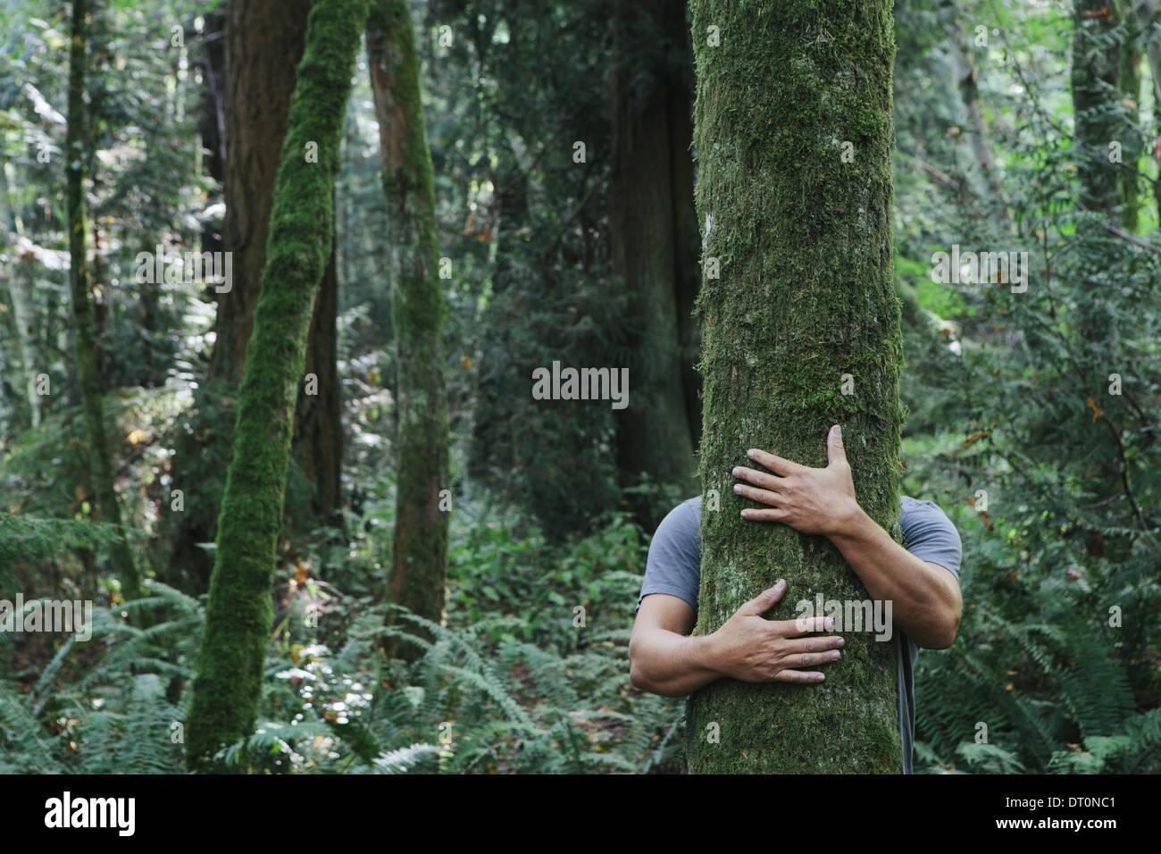 Seattle Washington USA Man hugging tree in lush green forest - Stock Image