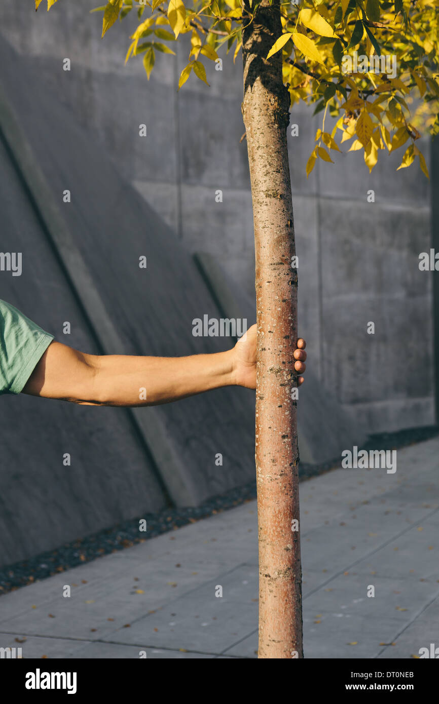 Seattle Washington USA Man holding small tree city sidewalk in background - Stock Image
