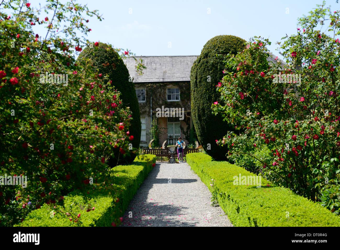 altamont house and garden yew box hedge hedging carlow ireland corona north - Stock Image