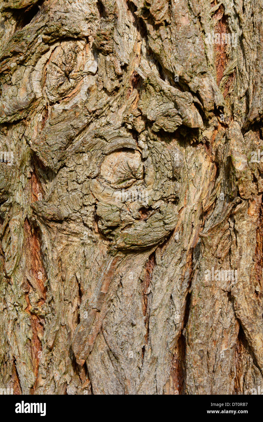 Tree Bark Close Up Macro with branch knot Baumstamm Baumrinde Nahaufnahme mit Astknoten Makro Textur Hintergrund Hochformat Stock Photo