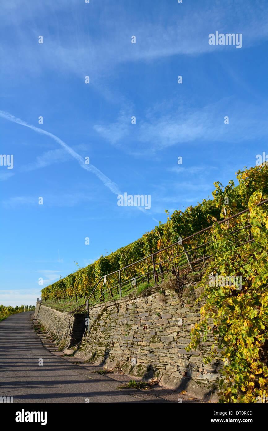 Vineyard with blue sky Moselle Germany Weinbergslandschaft an der Mosel Weinbergsweg mit Schiefermauer und blauem Himmel Stock Photo