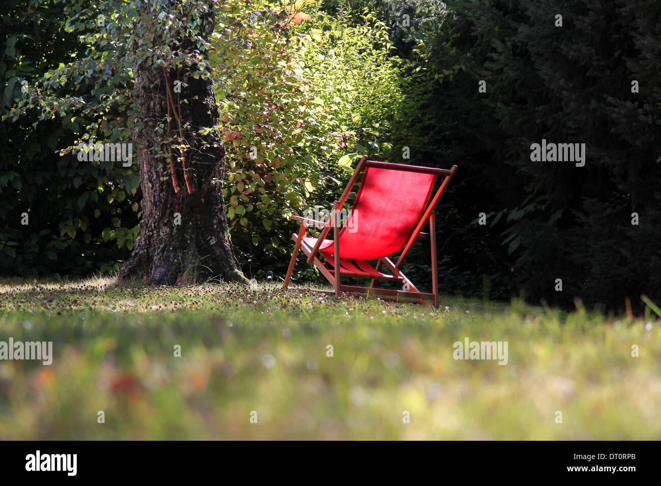 Red deck chair in the garden with big birch tree - Stock Image