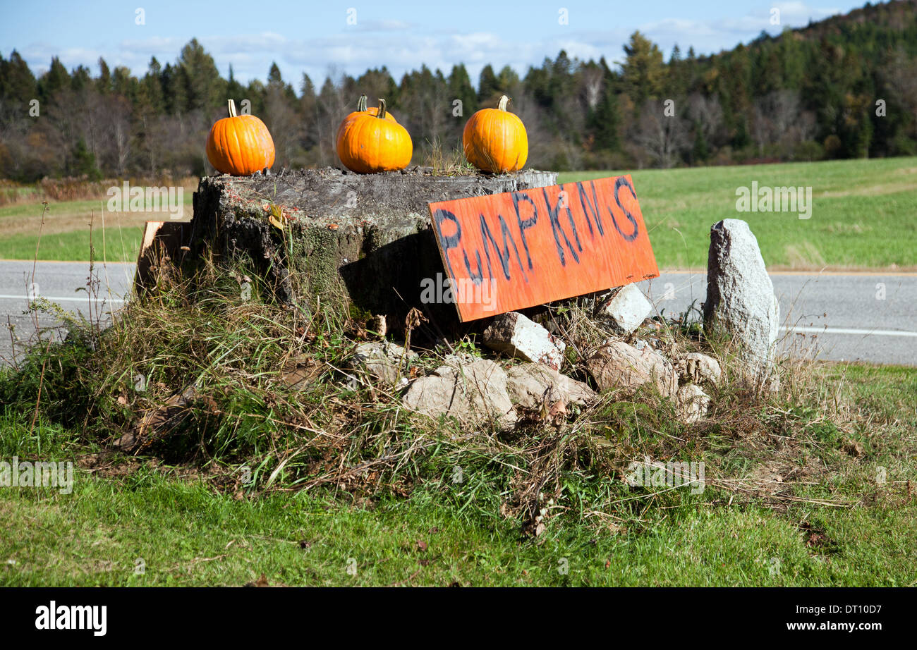 Roadside stand selling pumpkins, Errol area, New Hampshire. - Stock Image