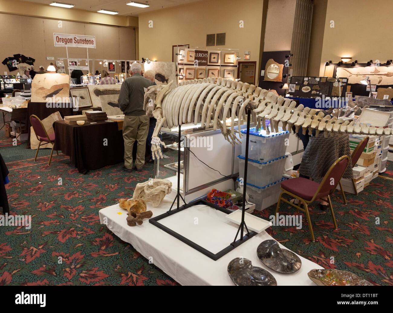 Displays of fossils, skeletons, gems, minerals rocks, crystals, and meteorites at the Gem and Mineral Show in Tucson, Arizona - Stock Image