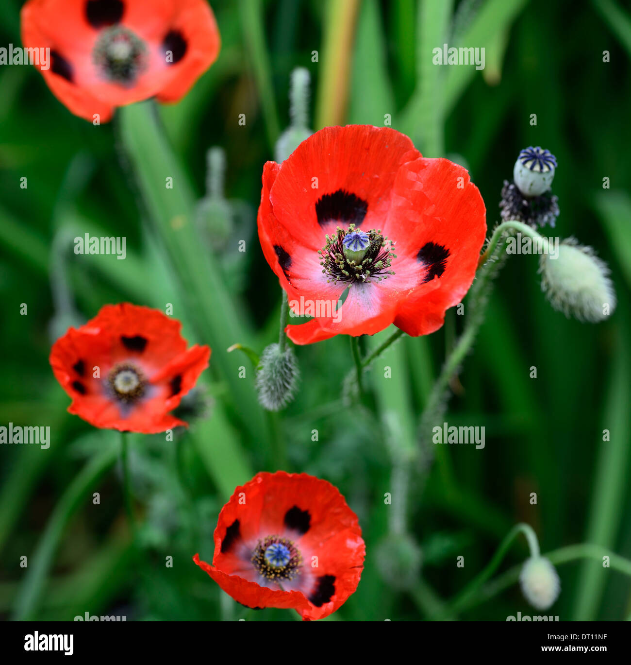 Red Flowers Black Spots Stock Photos Red Flowers Black Spots Stock