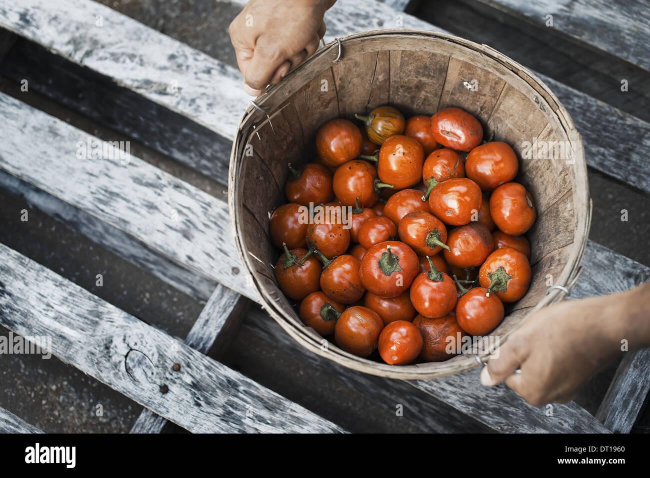 Woodstock New York USA Organic Hungarian Eggplants just harvested - Stock Image
