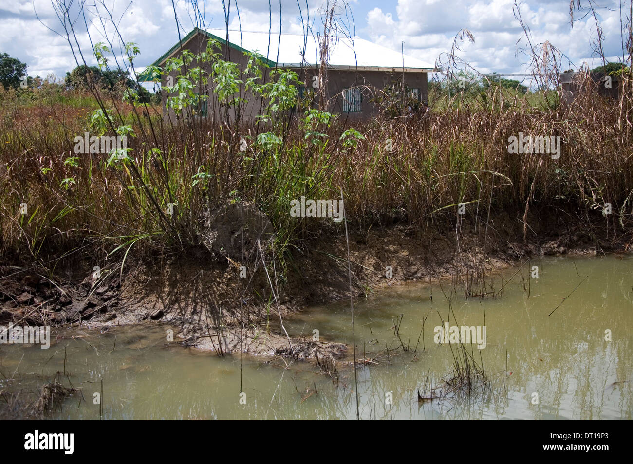 stagnant water provides a breeding place for the anopheles mosquito Stock Photo