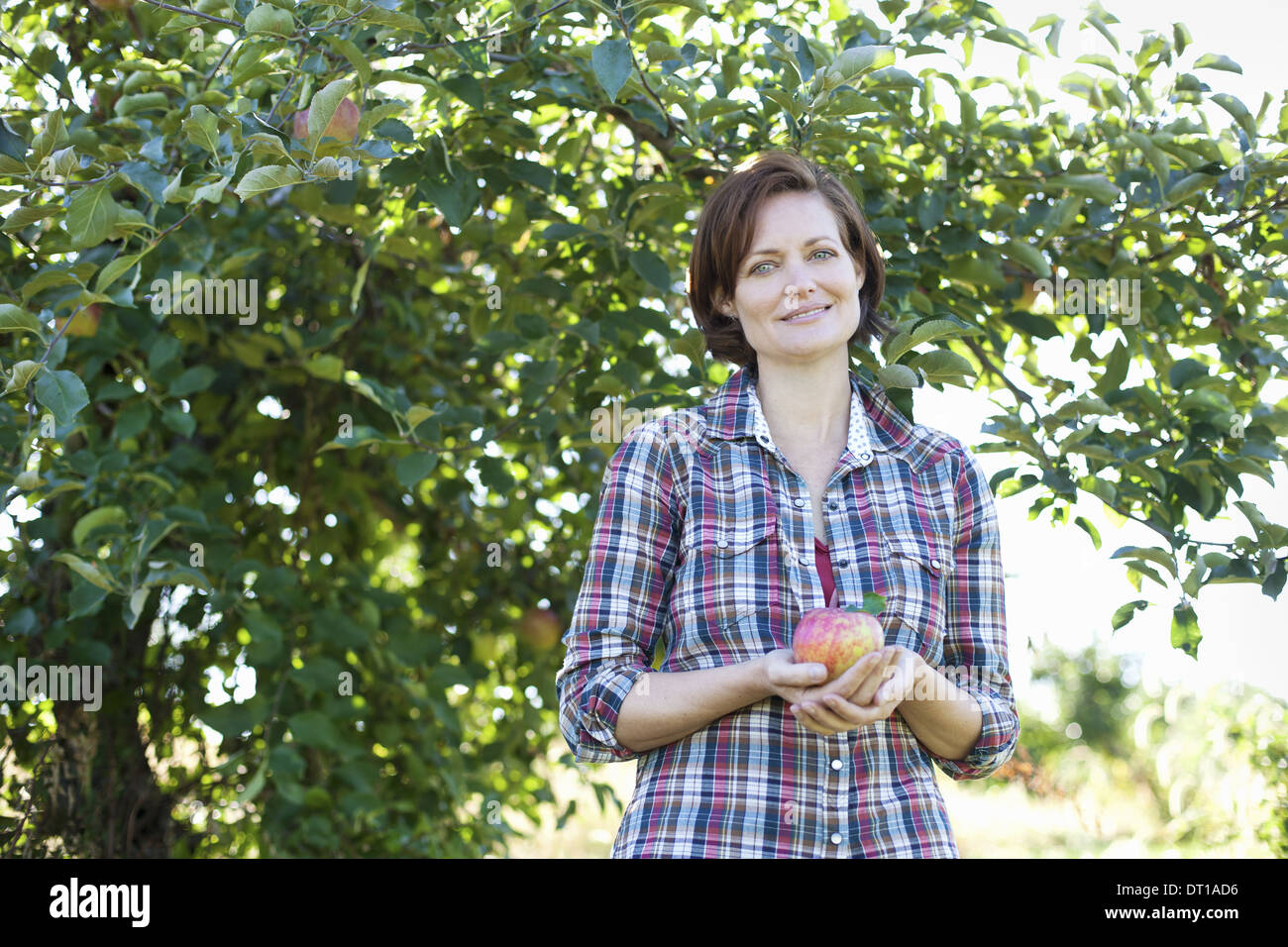 Woodstock New York USA woman holding organic picked apple in orchard - Stock Image