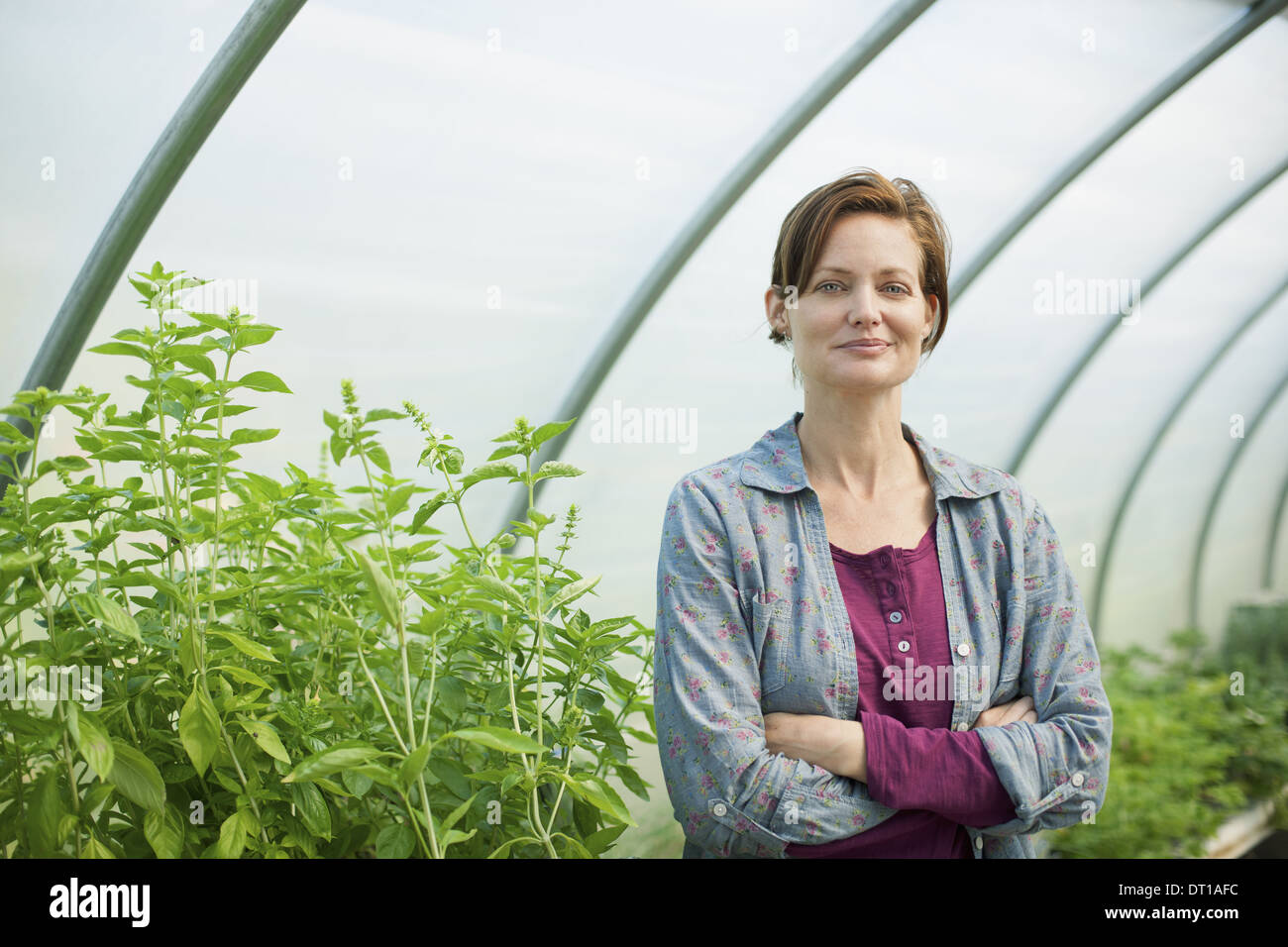 Woodstock New York USA woman working at an organic farm in the greenhouse - Stock Image