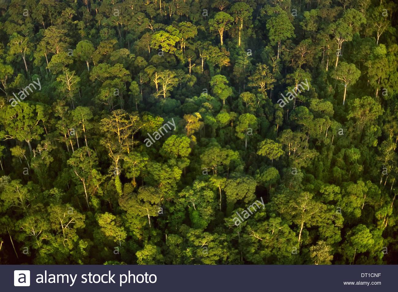 Borneo Lowland rainforest aerial Borneo - Stock Image