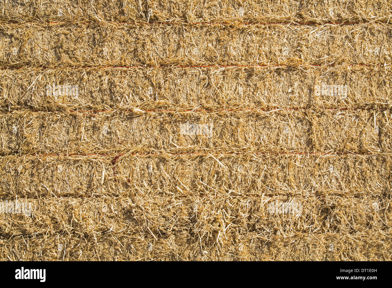 Washington State USA Hay bales stacked up Dried grass stalks baled - Stock Image