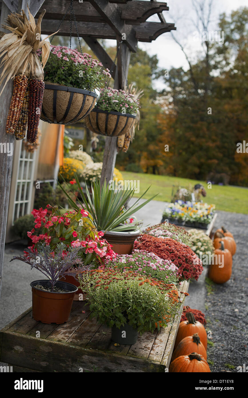 An organic farm stand Display of vegetables fruit and flowers - Stock Image