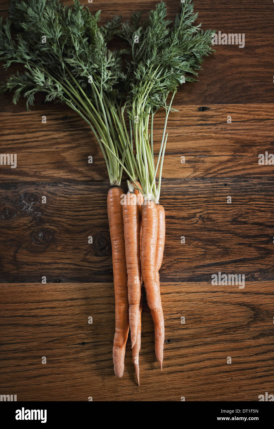 A small bunch of carrots with green leafy tops freshly harvested lying on a tabletop - Stock Image