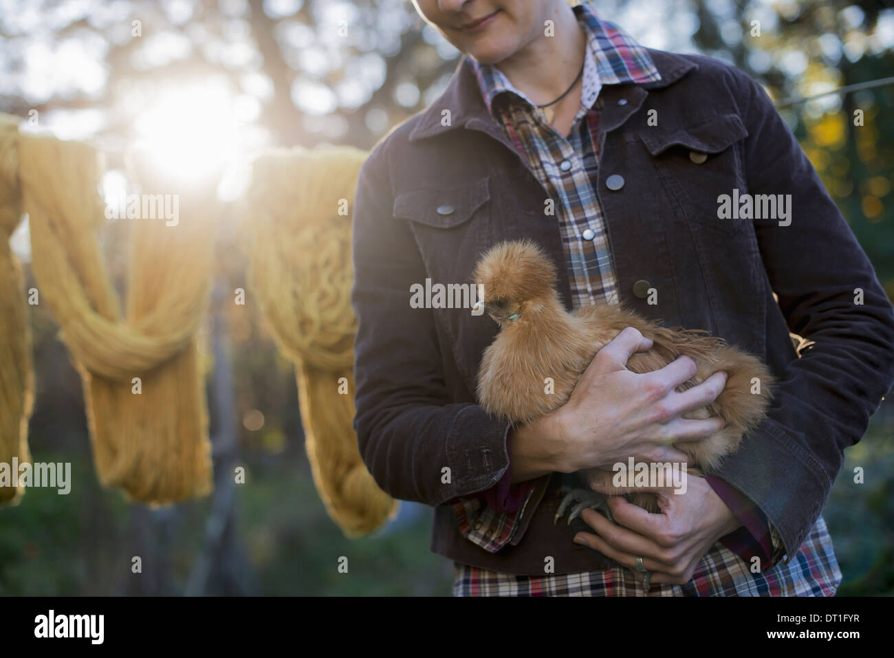 A woman holding a small brown fluffy chicken washing line Autumn sunshine filtering through trees Stock Photo