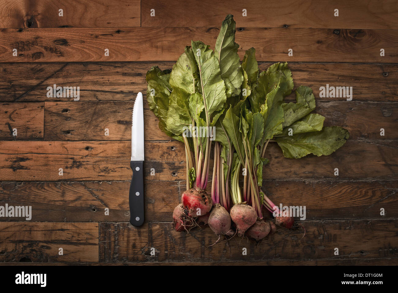 A handful of small beets fresh organic vegetables harvested for the table A vegetable knife Stock Photo