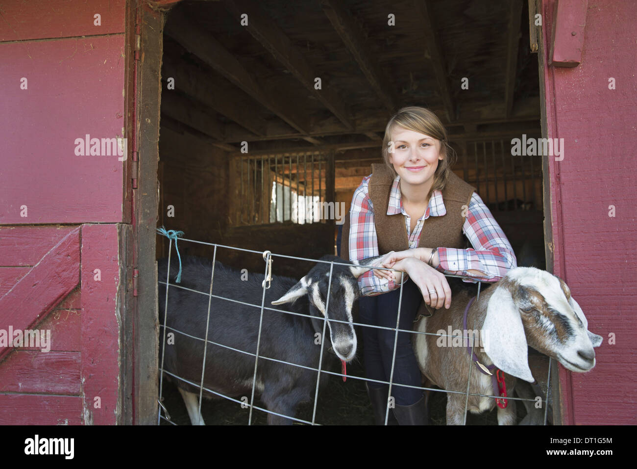 A goat farm A young girl leaning on the barrier of the goat shed with two animals peering out - Stock Image