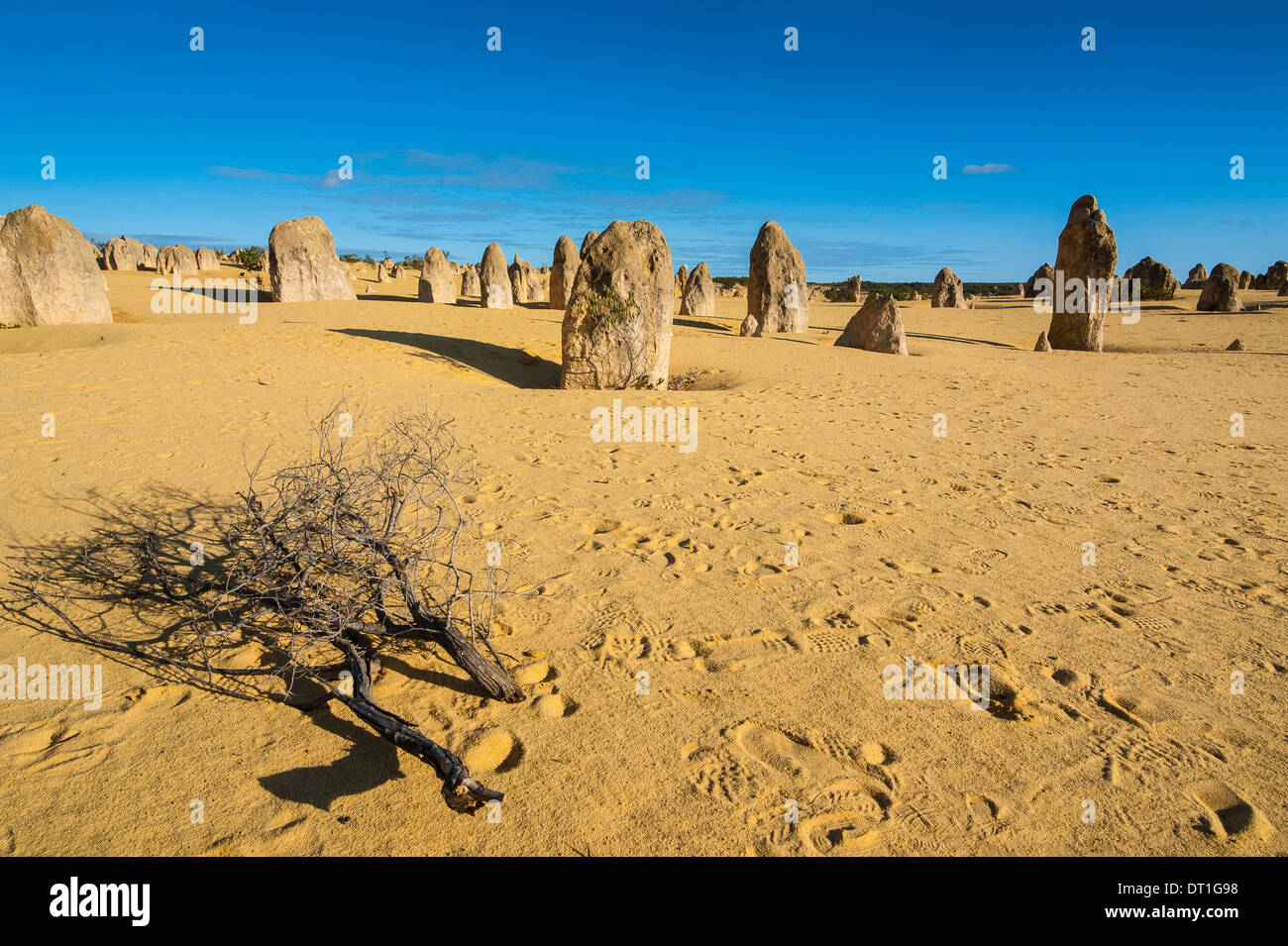 The Pinnacles limestone formations at sunset in Nambung National Park, Western Australia, Australia, Pacific - Stock Image