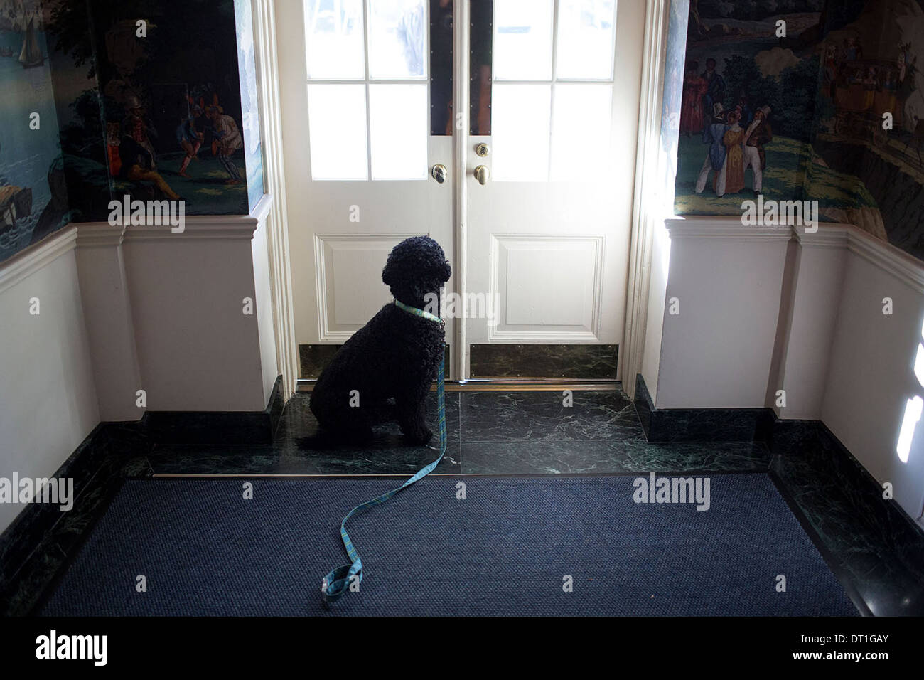 Sunny Obama waits to go outside by the door in the Diplomatic Reception Room Vestibule of the White House Nov. 8, Stock Photo