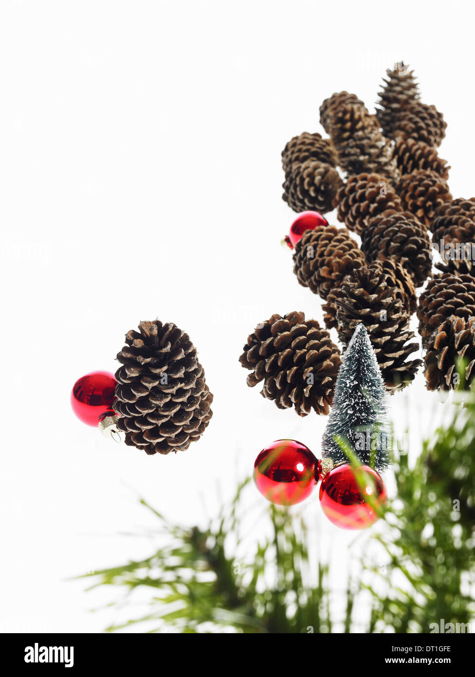A pine tree branch with green needles Christmas decorations Pine cones and small red shiny ornaments - Stock Image