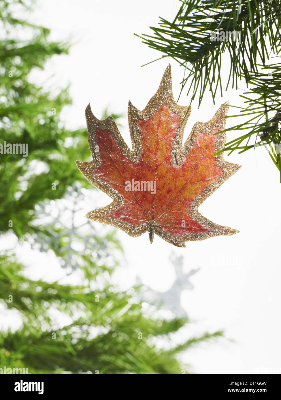Still life Green leaf foliage and decorations A pine tree branch Christmas decorations A brown ornament a maple leaf shape - Stock Image