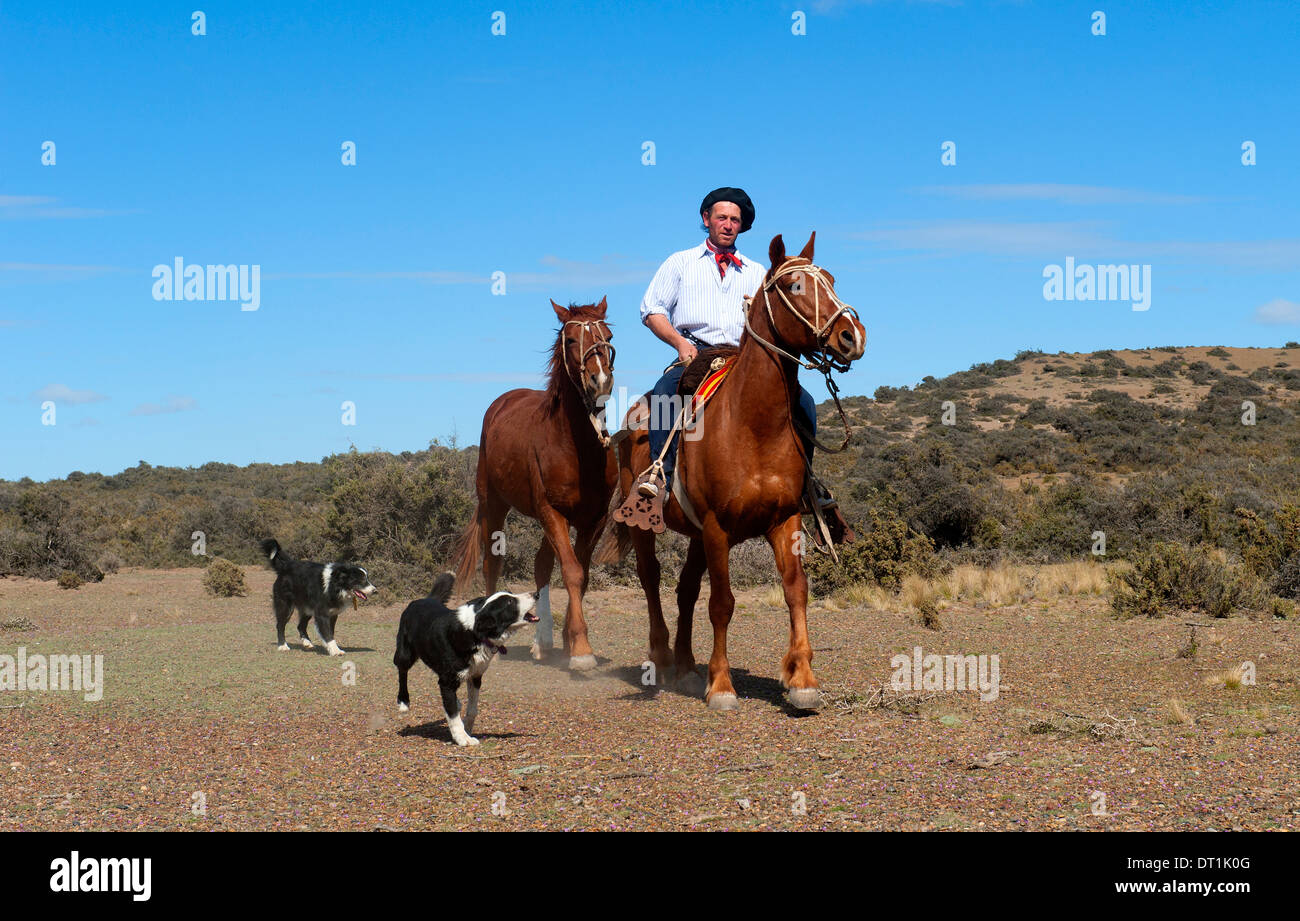 Gaucho riding his horse accompanied by dogs, Peninsula Valdes, Patagonia, Argentina, South America - Stock Image