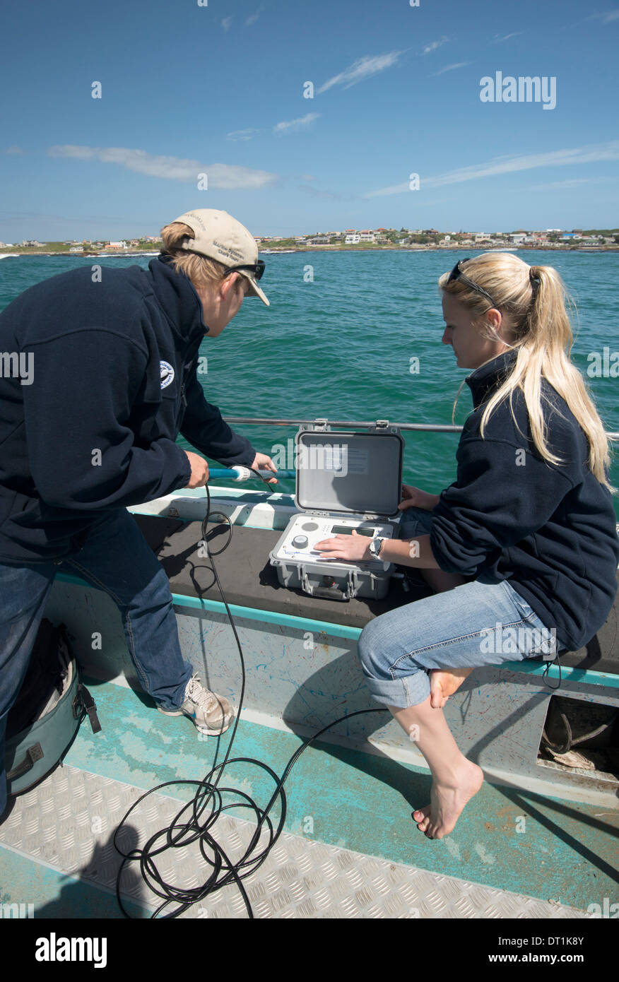 Scientists use hydrophone to track tagged great white shark behaviour, Gaansbai, Western Cape, South Africa Stock Photo