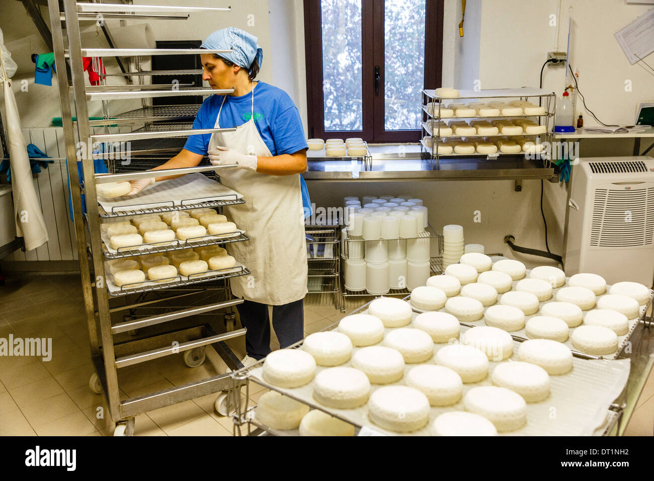The goat farm for cheese making at the Slow Food Presidium of the Robiola Roccaverano, Piedmont, Italy, Europe - Stock Image