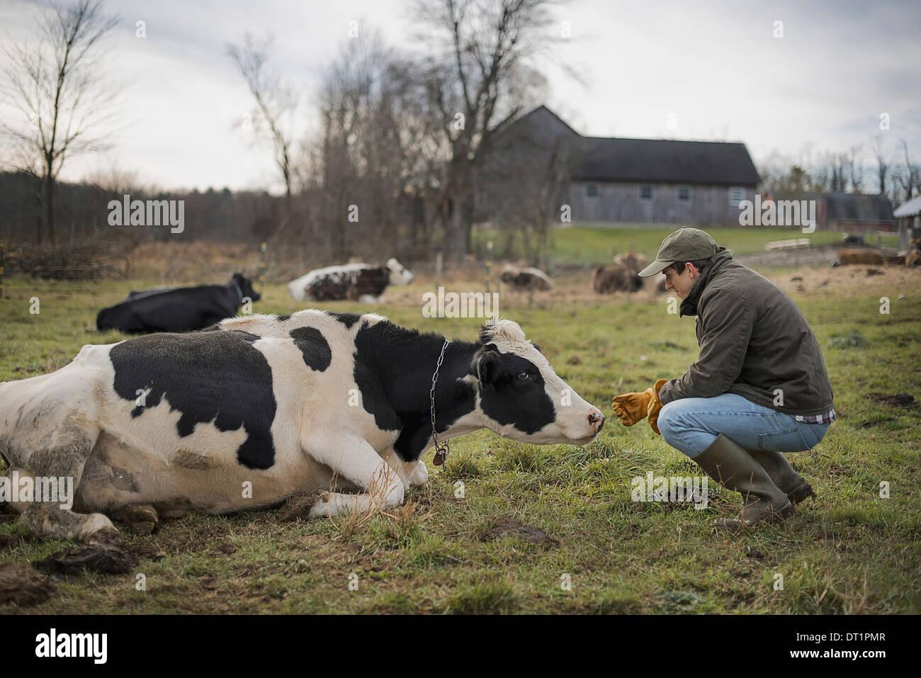 Dairy Farm - Stock Image