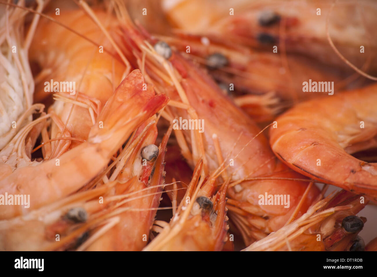 A dish of freshly cooked prawns with shells heads and tails on Seafood - Stock Image