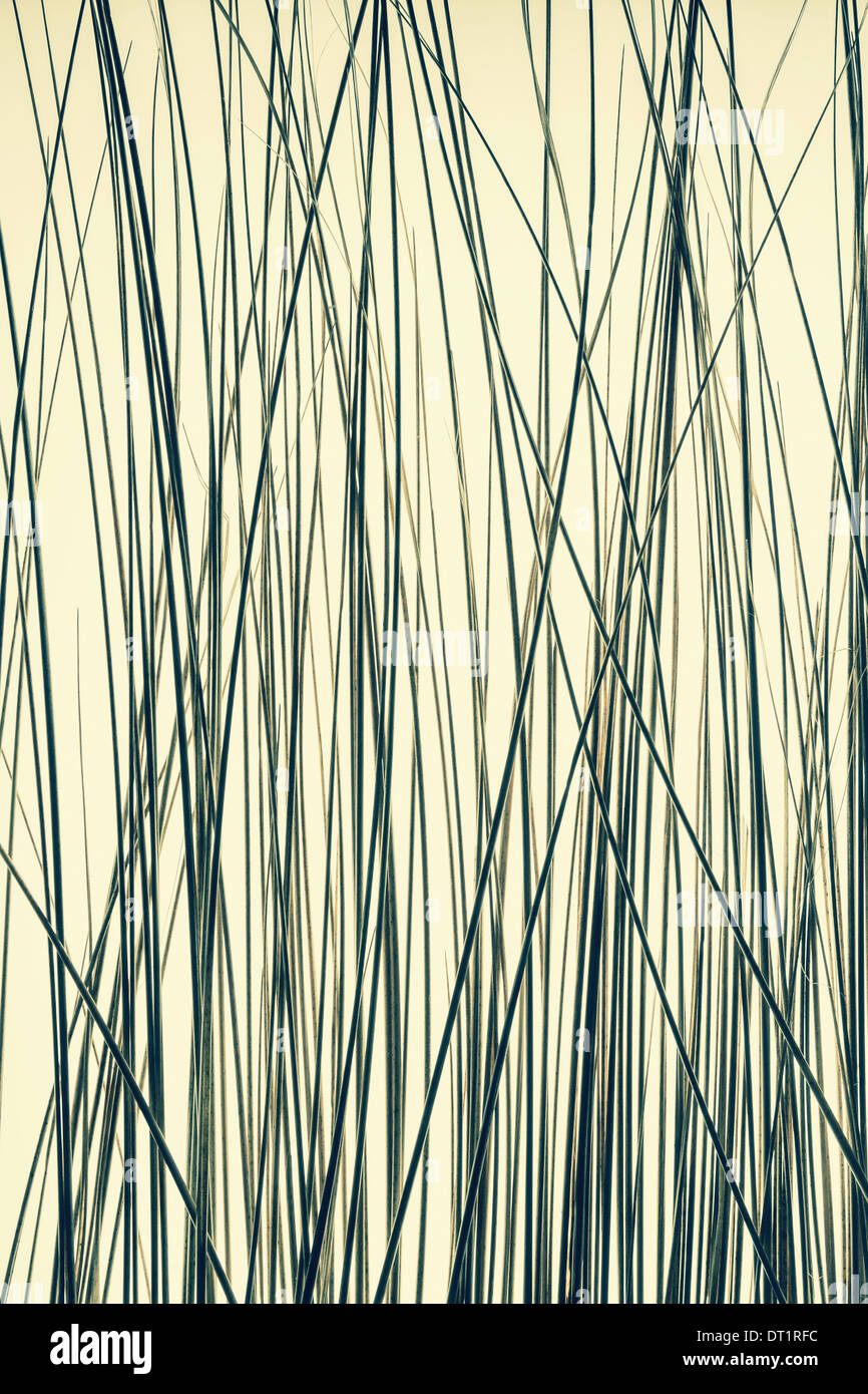 Detail of ornamental grasses - Stock Image