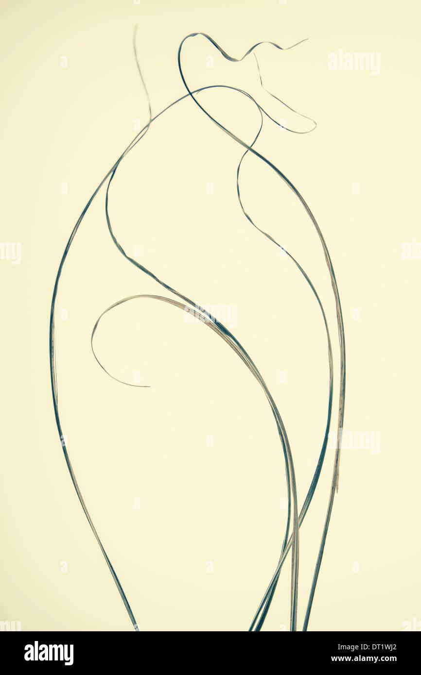 Detail of ornamental grasses - Stock Image