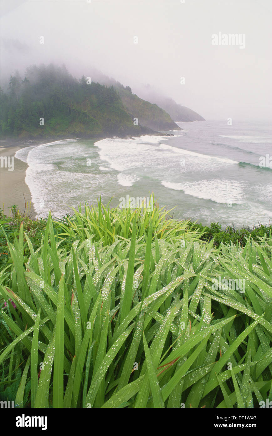 Heceta Head is a headland on the Pacific coastline of Oregon - Stock Image
